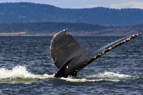 observacao de baleias no rosa tudo que voce saber antes do passeio