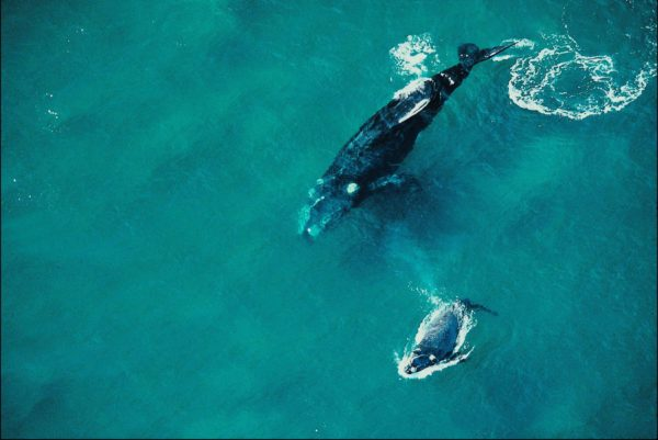 whalewatching uma experinecia inesquecivel na costa de santa catarina